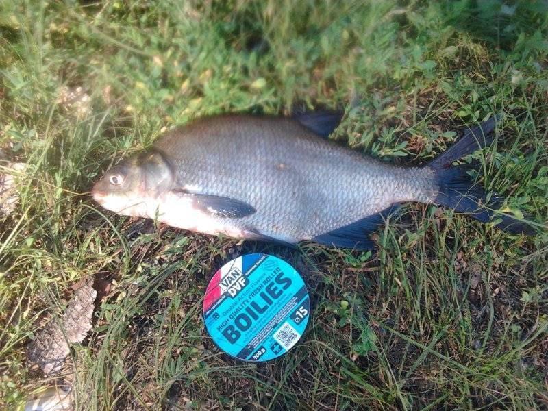 Firstfisher.ru – интернет-журнал о рыбалке и рыболовах. рыбалка в белгородской области