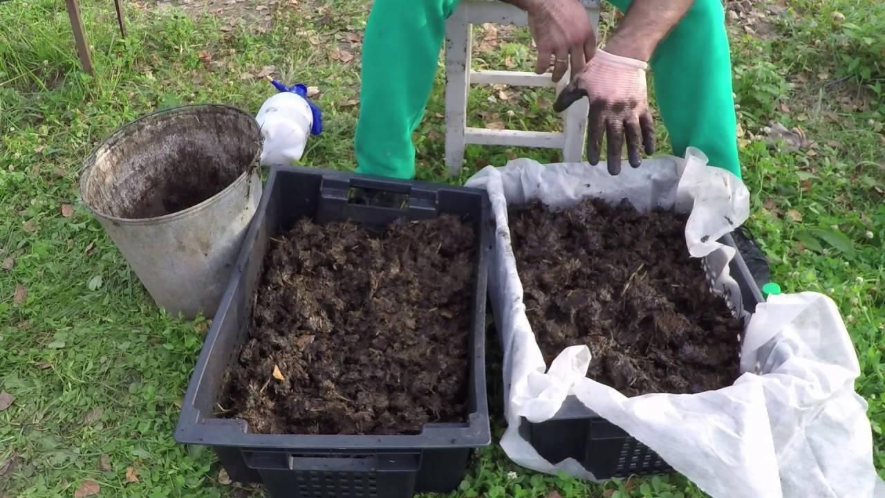 Разведение червей в домашних условиях для рыбалки: как разводить, чем подкармливать при выращивании