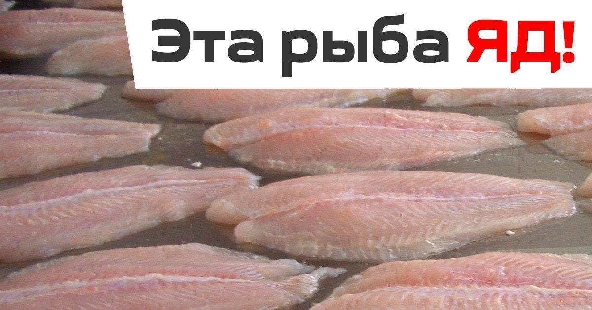 Как приготовить вкусные блюда из рыбы морской язык в духовке или на сковороде