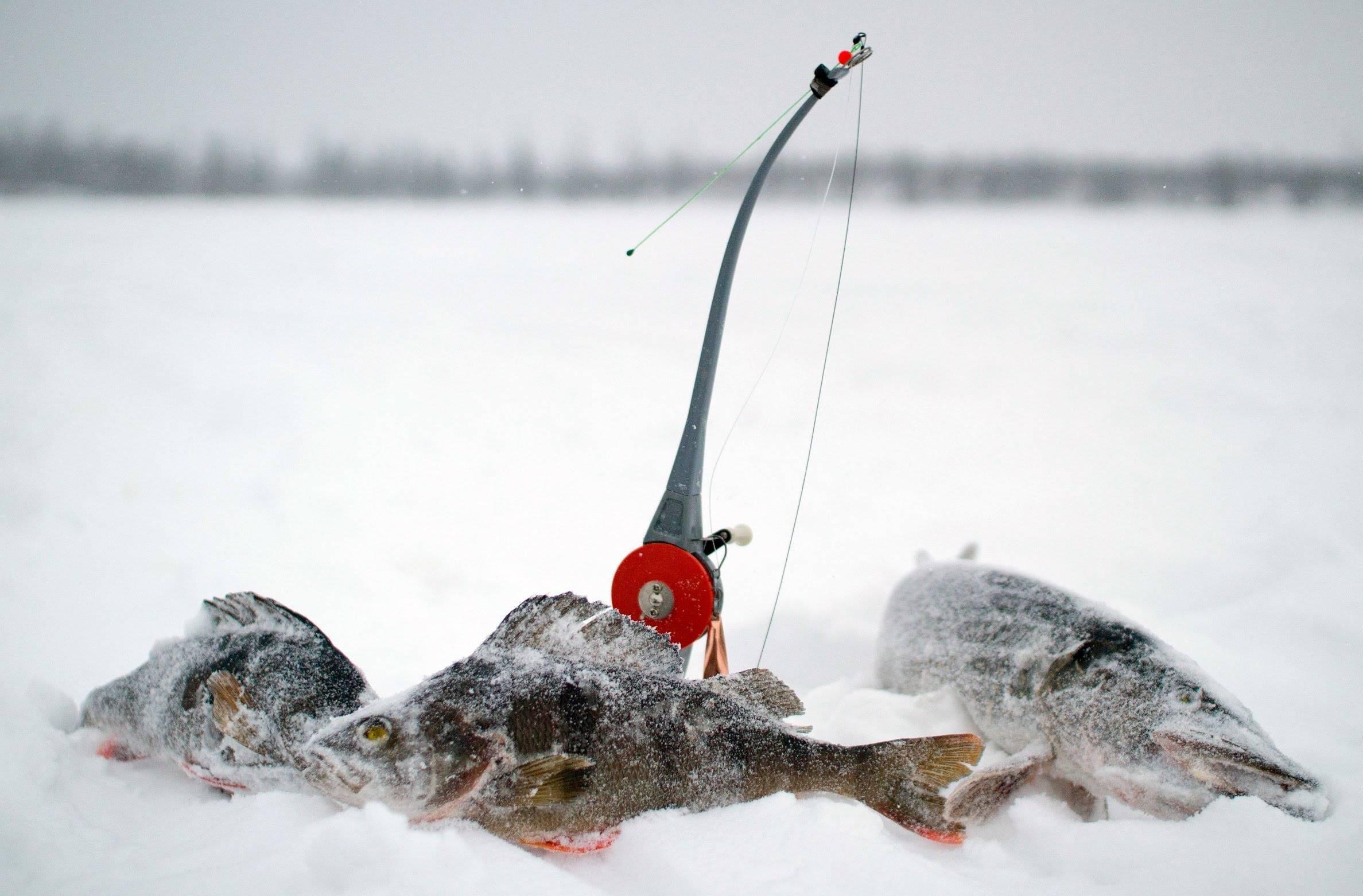 ✅ отчет о рыбалке на имандре - danafish.ru