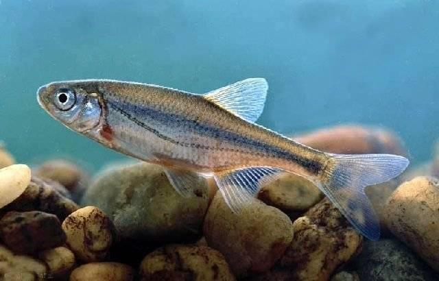 Рыбы россии: названия и описание с фото