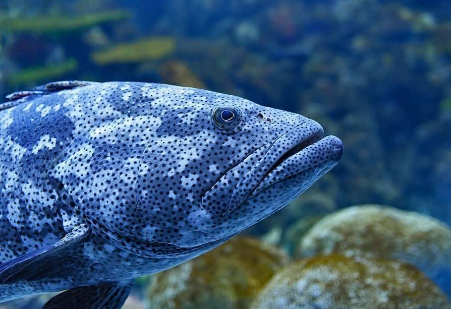 Разнообразие черных аквариумных рыб