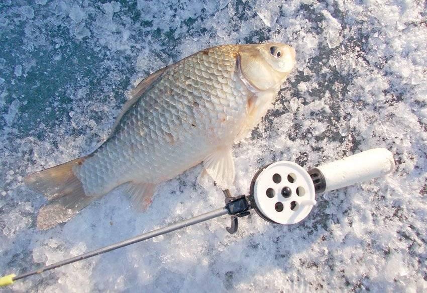 Зимняя рыбалка на карася