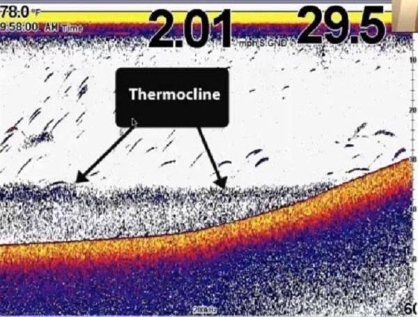 Термоклин на эхолоте — viberilodku