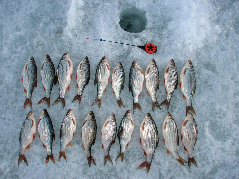 Мормышки на чебака для зимней рыбалки
