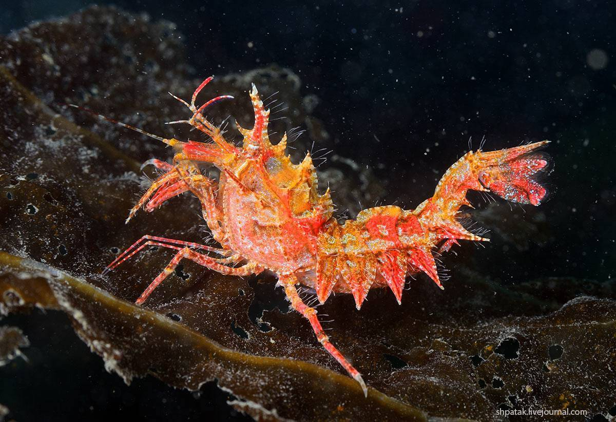 Креветки и крабы в черном море