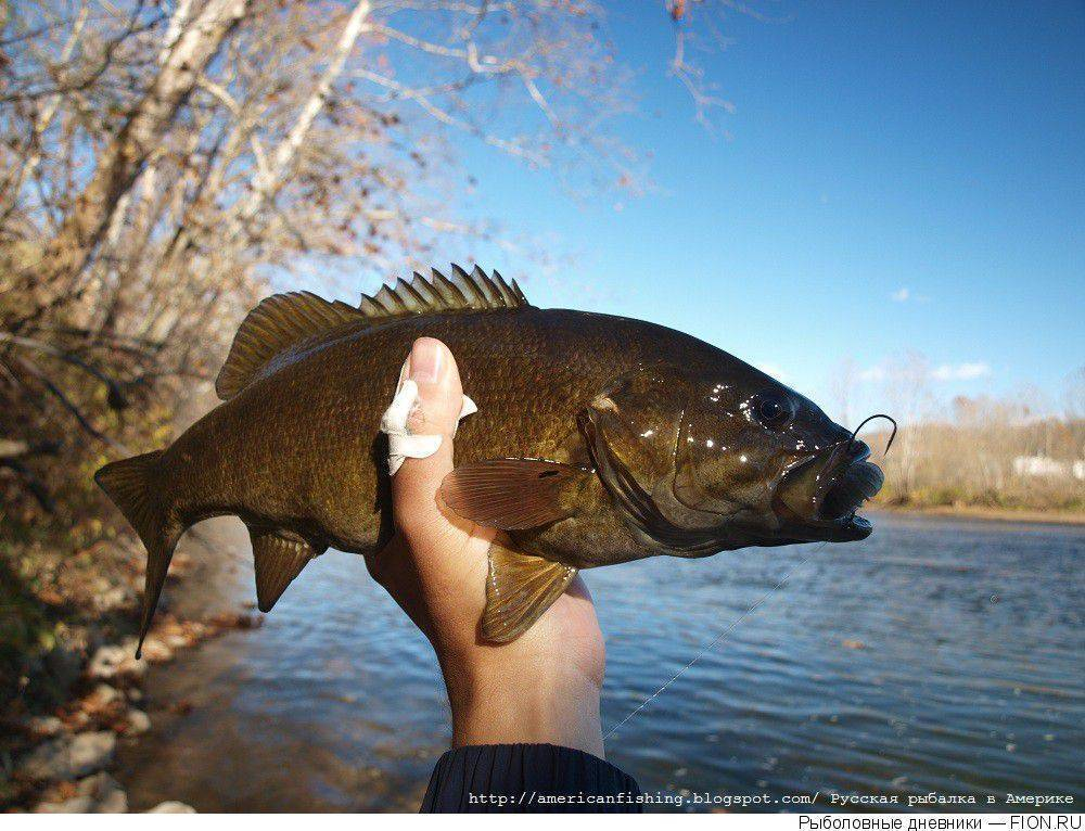 Басовая рыбалка - bass fishing - qaz.wiki