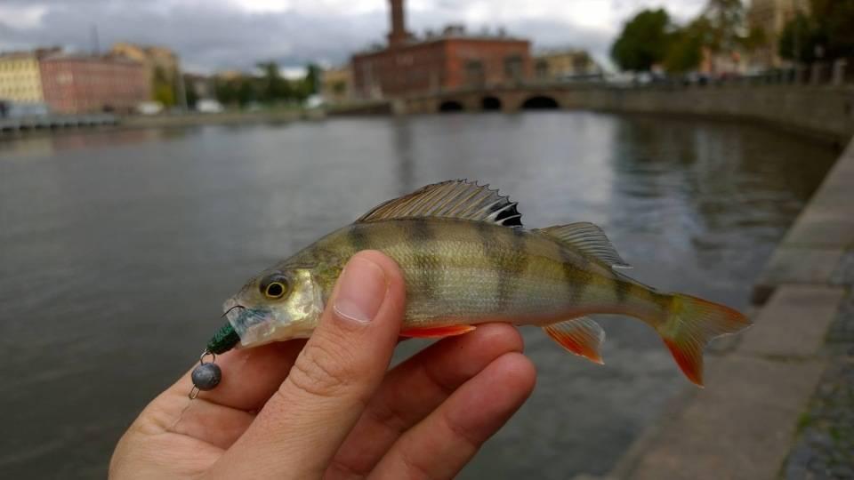 Где в краснодаре самые рыбные места | новости краснодара и юга.