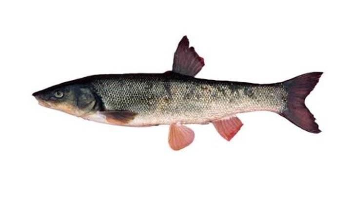 Рыбы без чешуи. названия описания и виды рыб без чешуи    животный мир