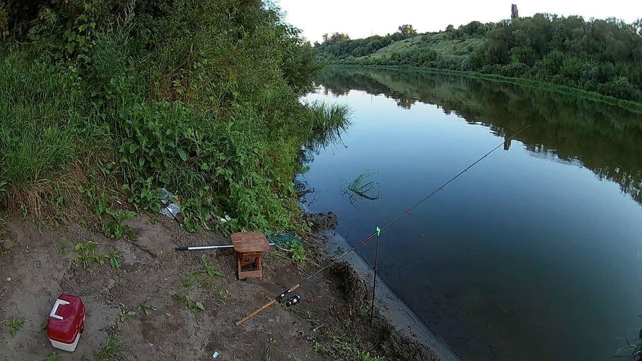 Ловля на фидер для начинающих: сборка снасти и тактика рыбалки
