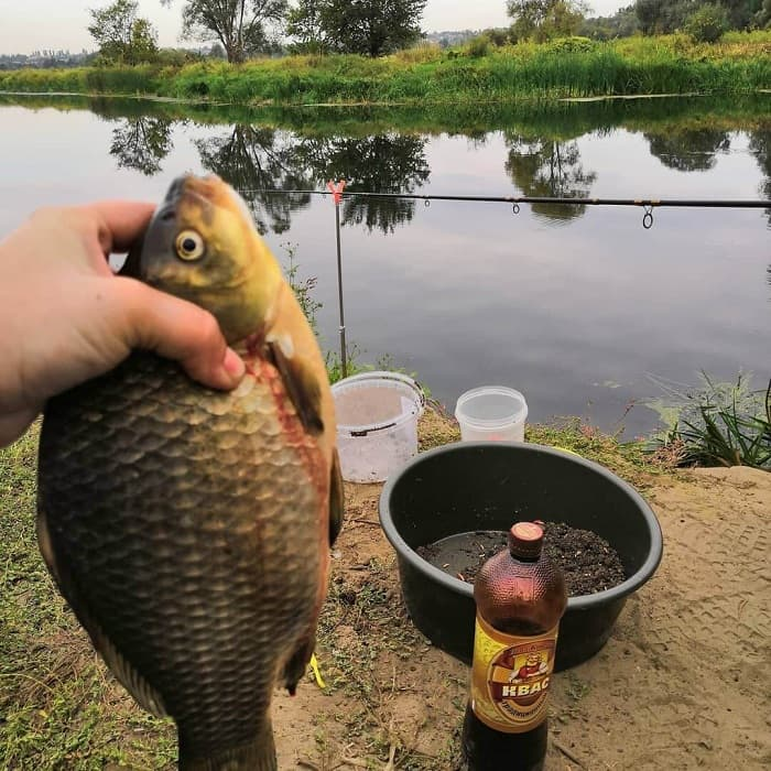 Рыбалка в липецкой области зимой — особенности ловли, рыбные места в липецке