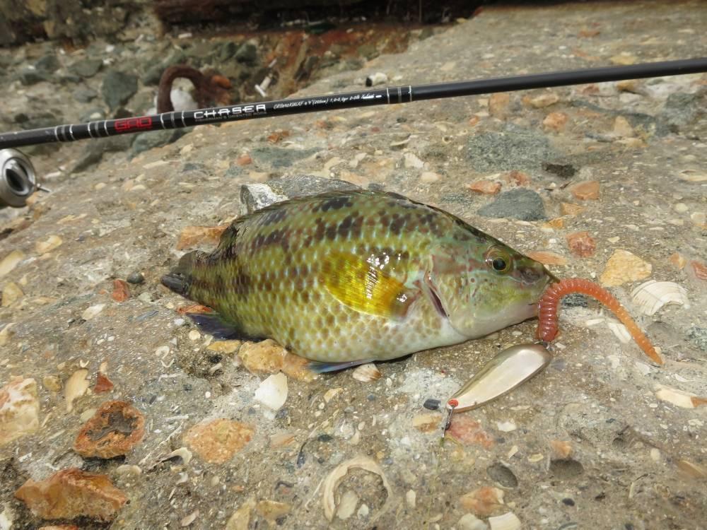 Морская рыбалка в крыму с берега 2019 на спиннинг, снасти