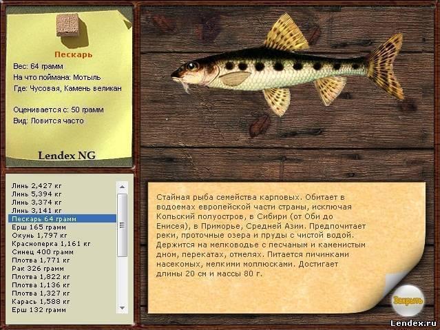 Пескарь: что за рыба и как её ловить