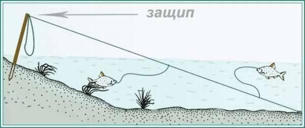 Донка на щуку: тонкости ловли