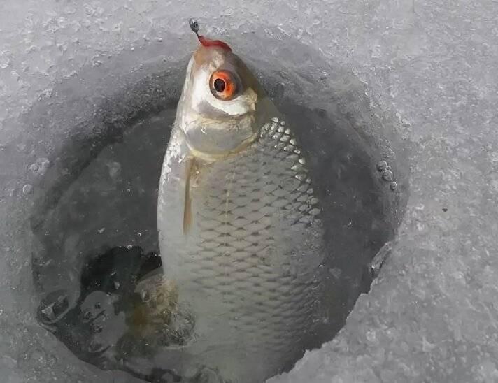 Ловля плотвы зимой (видео) | топ-2: мормышка и поплавок