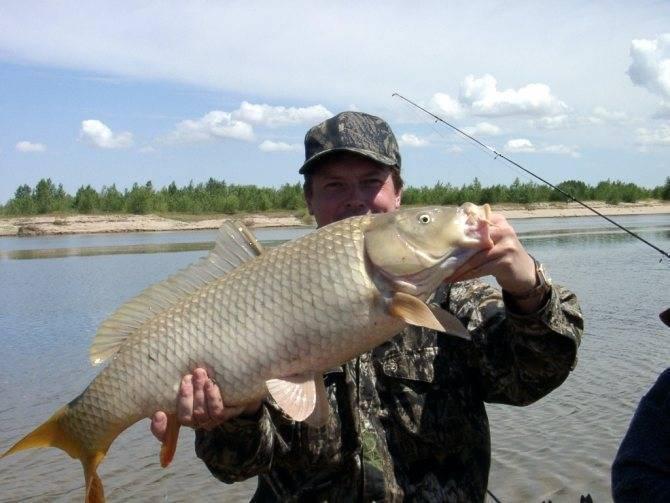Рыбалка в курской области: лучшие места на карте топ-7