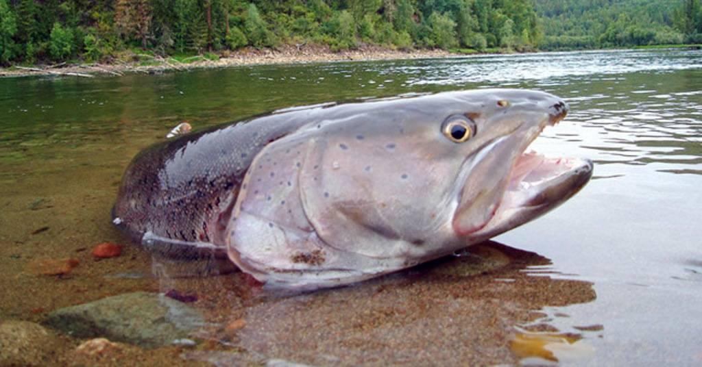 Сторожевое-1. река дон в конце октября