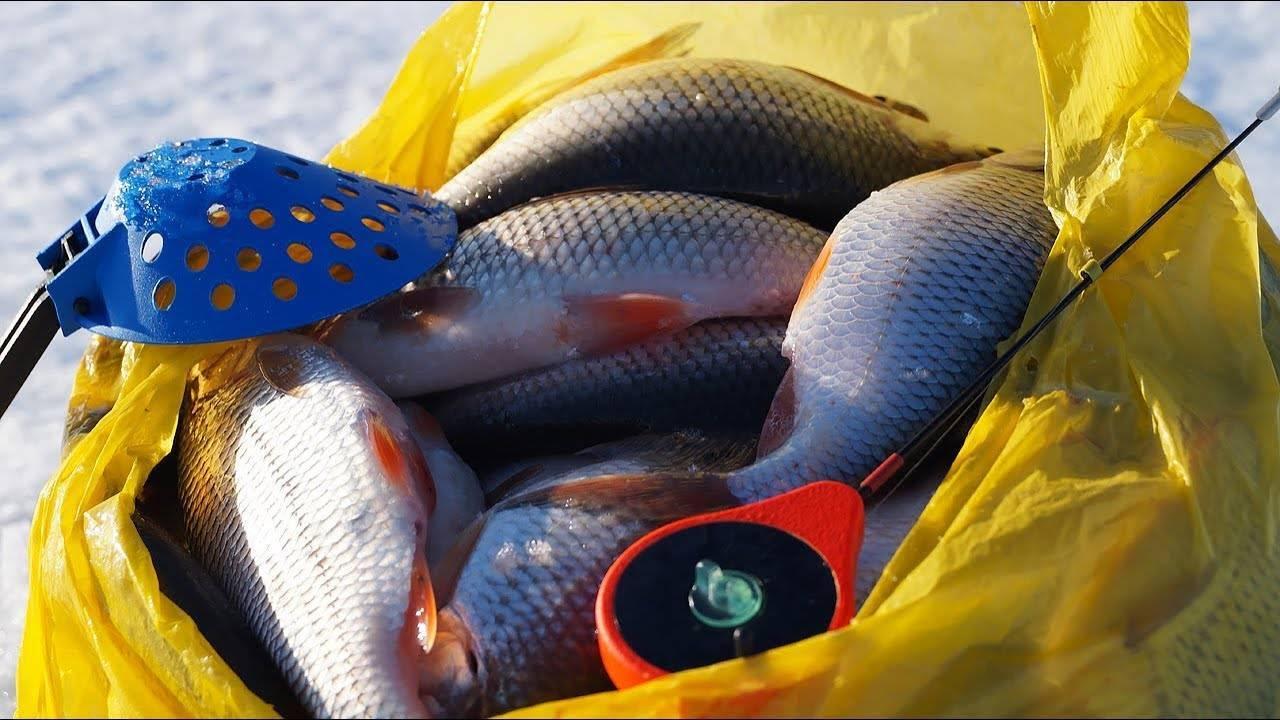 Как успешно ловить крупную плотву – рыбалке.нет