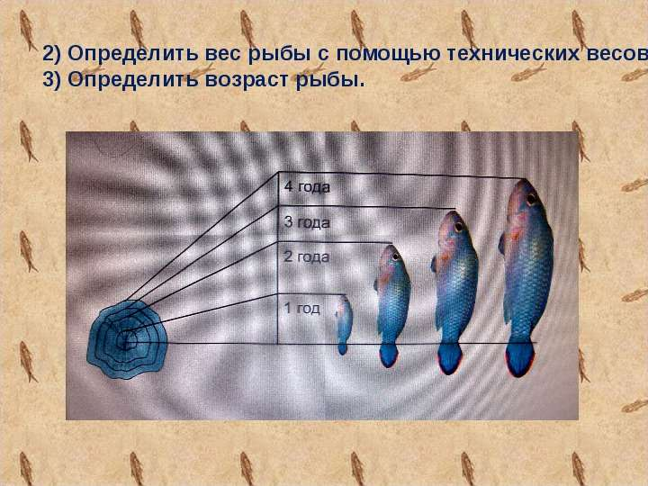 Как определить возраст щуки