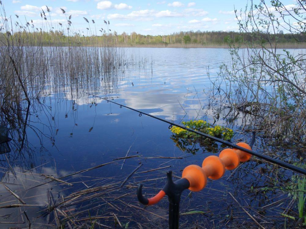 Ловля карася на фидер: оснастка для стоячей воды и течения