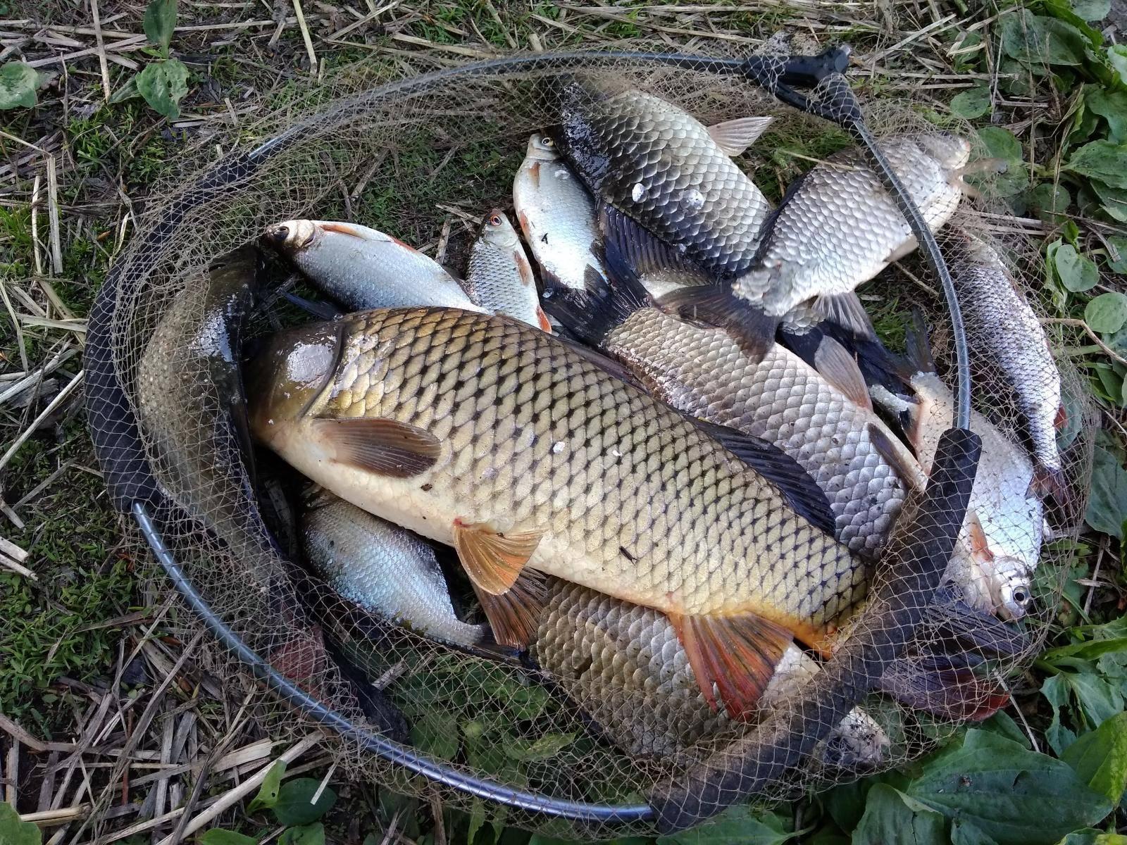 Платная рыбалка в воронежской области: рыболовные базы, водоемы и туры воронежской области