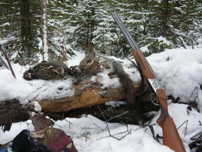 Виды охоты: описание, особенности и интересные факты