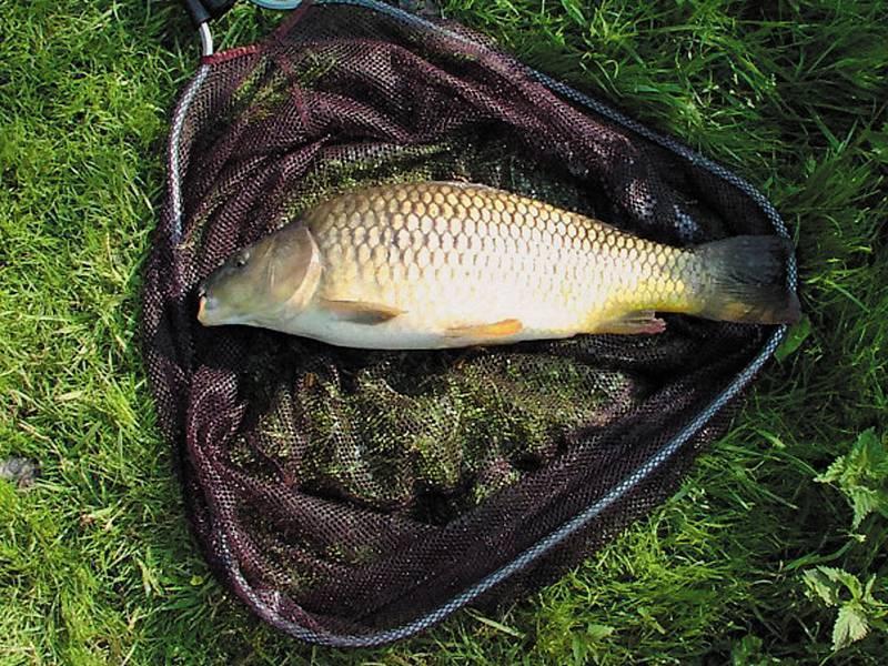 Как приготовить горох для рыбалки на карпа: популярные рецепты