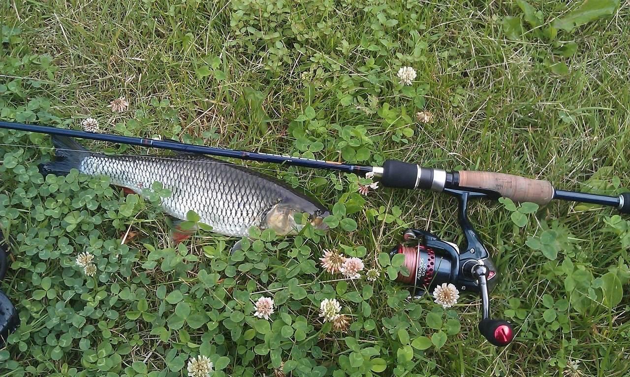 На что ловить голавля - лучшие наживки и приманки, техника ловли