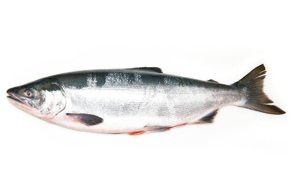 Нерка что за рыба. википедия, рецепты приготовления, фото.