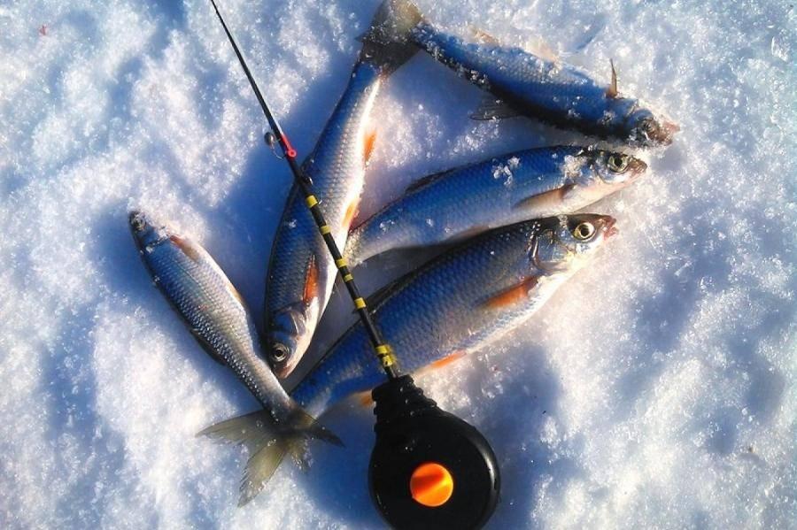 Ловля рыбы на енисее. какая рыба водится в енисее