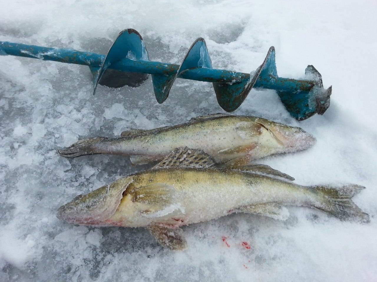 Ловля судака на балансир зимой (видео)