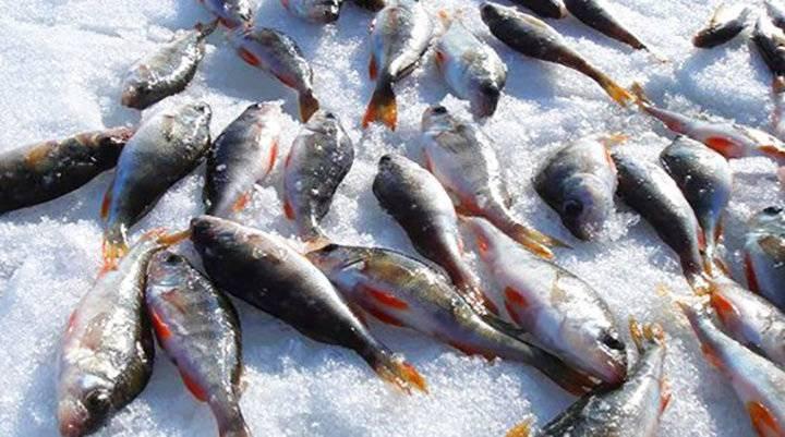 Рыбалка в липецкой области. отчеты рыбаков на форуме