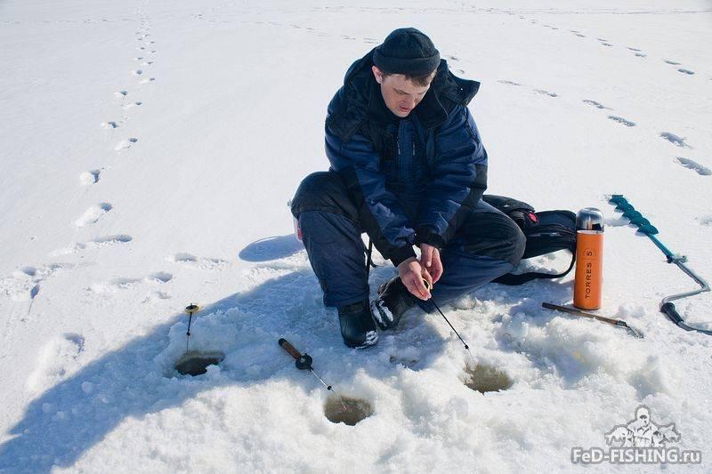Зимний фидер своими руками - подробная инструкция [2019]