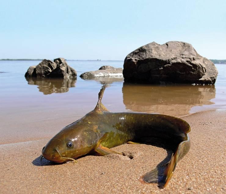 Сообщение про касатку – описание, среда обитания и образ жизни млекопитающего