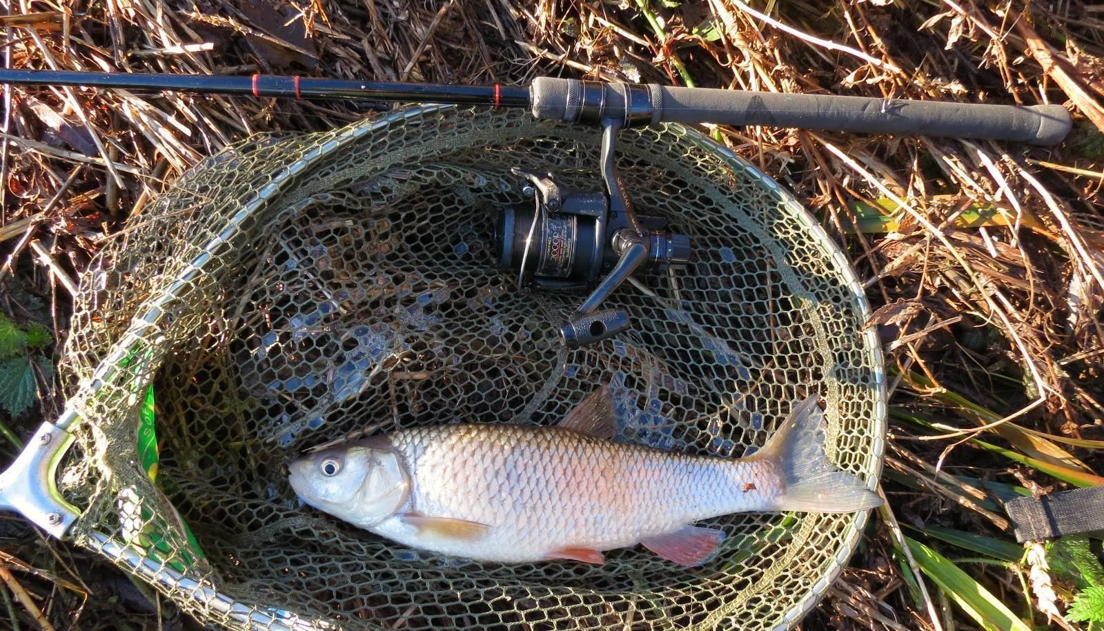 Ловля красноперки на поплавочную удочку или спиннинг, на что клюет, прикормки для рыбалки