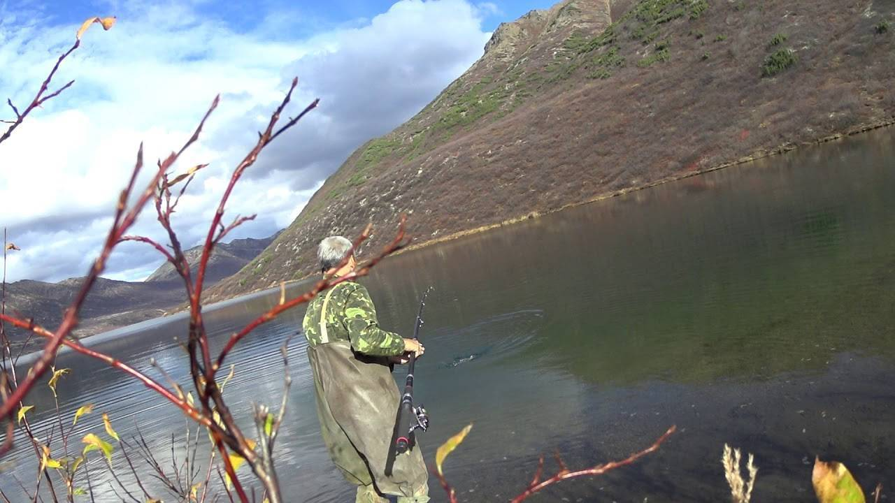 Ловля щуки на озере