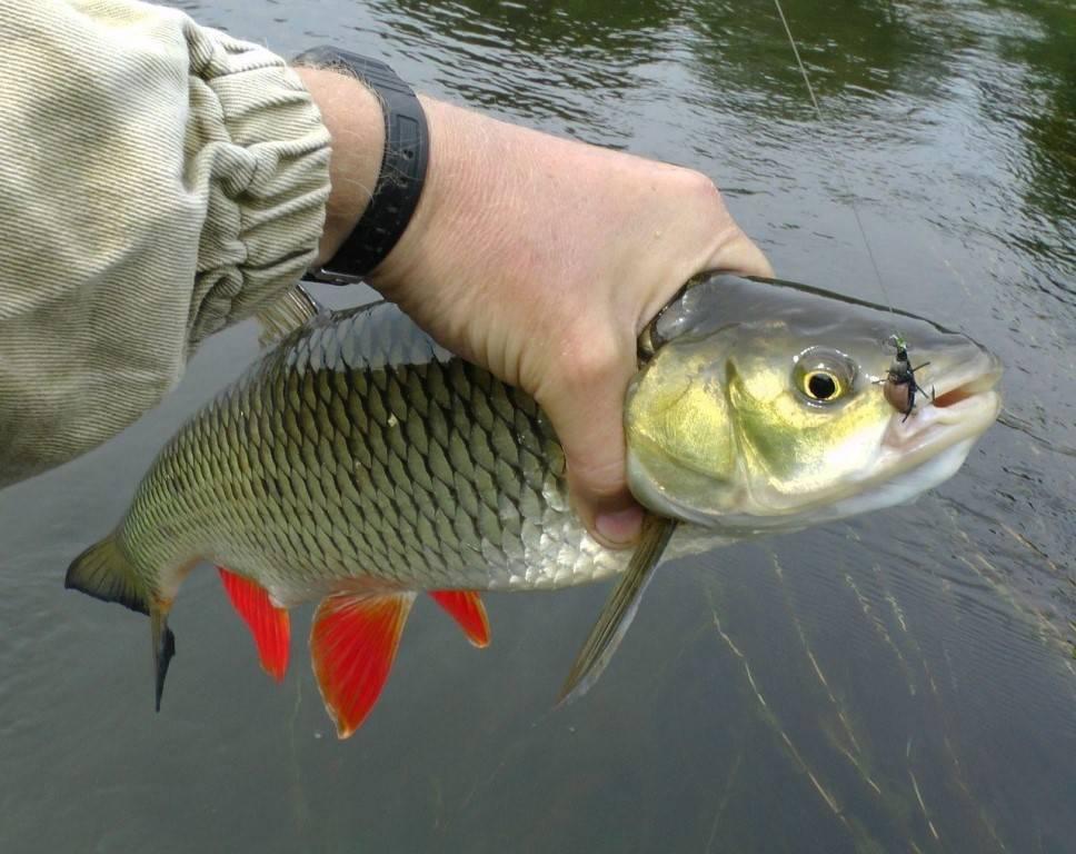 Рыбалка в брянской области платно