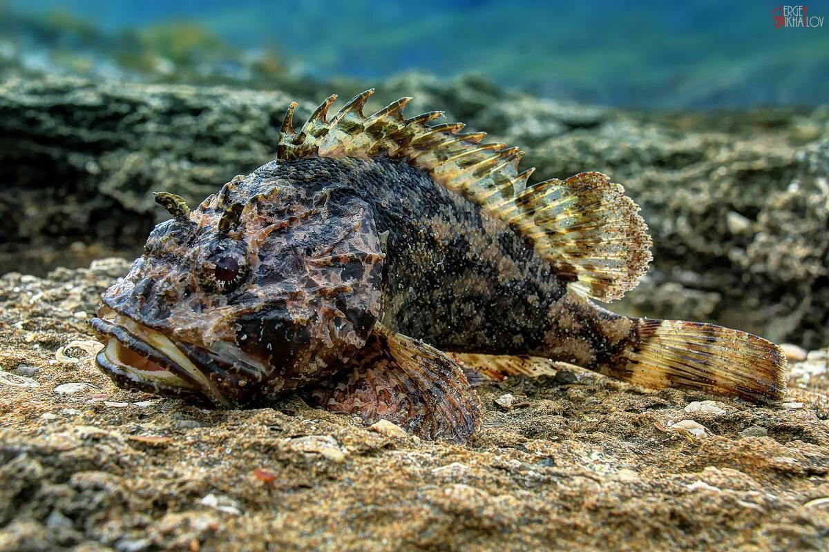 Акулы у побережья крыма и другие опасности черного моря   туда-сюда: походы по крыму   яндекс дзен