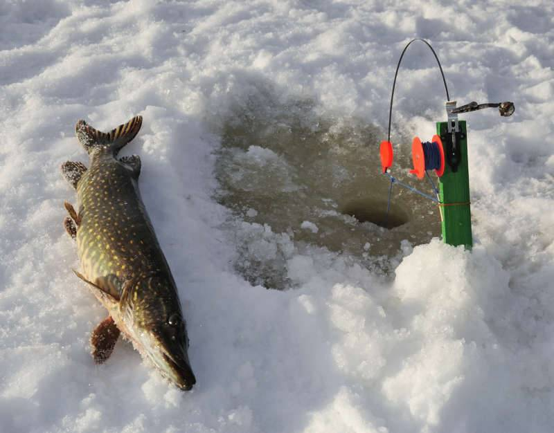 Ловля щуки: снасти, тактика, рыбалка по сезонам