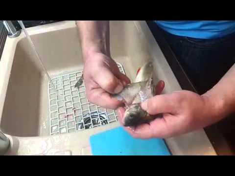 Как быстро почистить окуня от чешуи