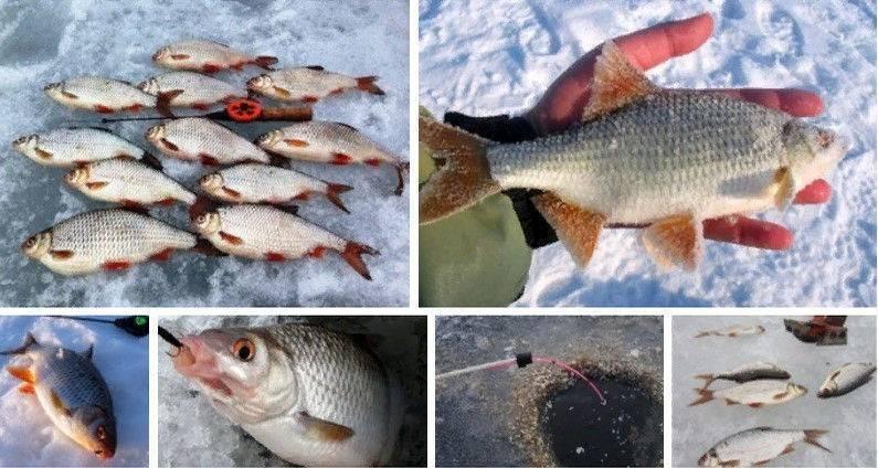 Ловля плотвы зимой: где искать и какими способами осуществлять рыбалку