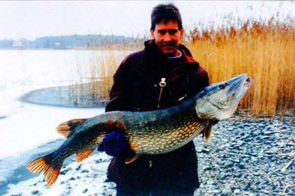 Самые большие пойманные щуки (22 фото): в россии и в мире. какая крупная щука была поймана на спиннинг? длинная щука, которую поймали в белоруссии