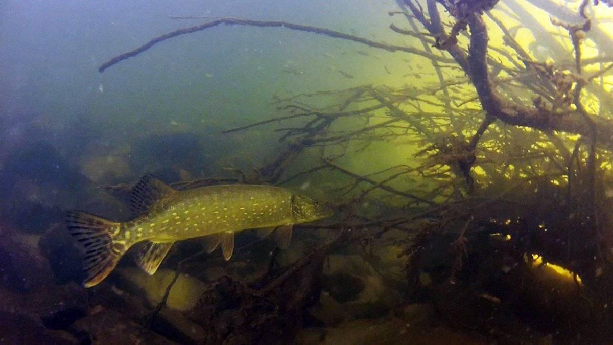 Платная рыбалка в раково