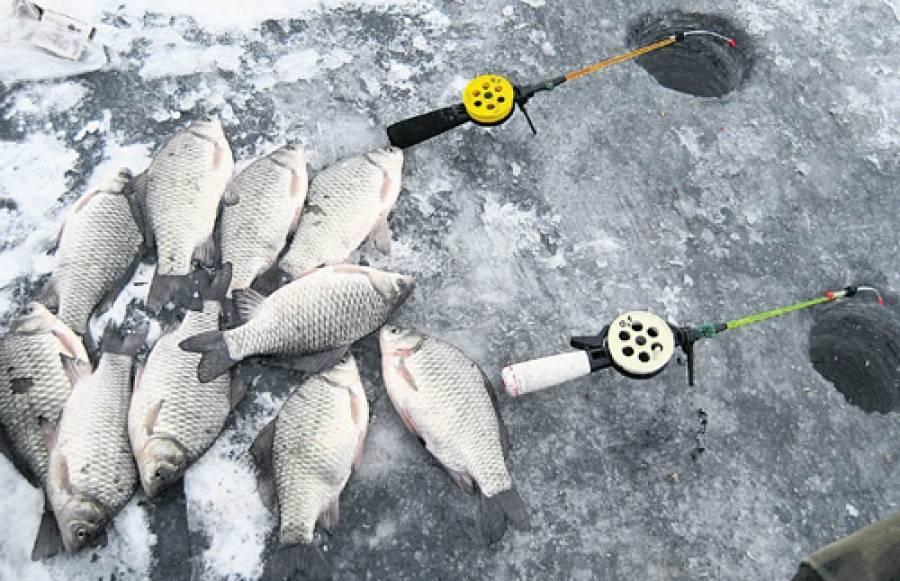 Ловля карася зимой со льда - снасти с мормышкой и прикормка