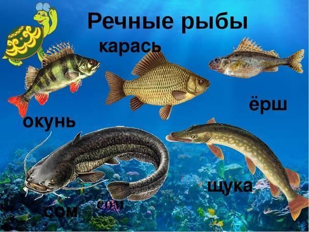 В какие отношения вступают щука и карась живущие в одном водоеме