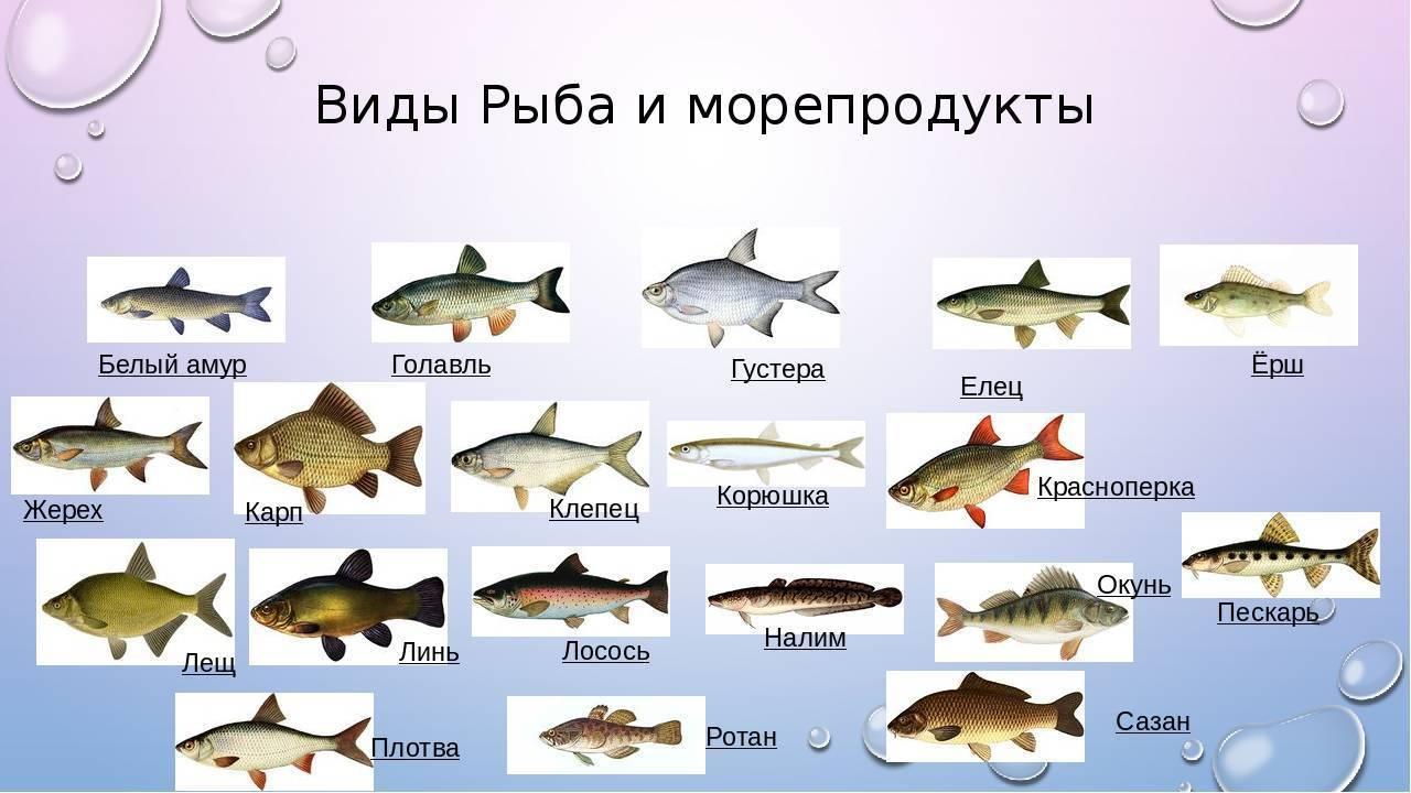 Белая форель или красная, виды форели, чем они отличаются, морская или речная рыба