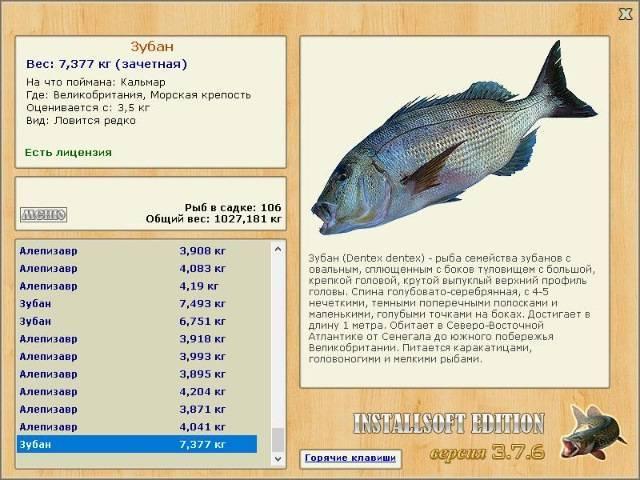 Рыба зубатка: польза и вред, фото, где водится, как приготовить правильно, видео