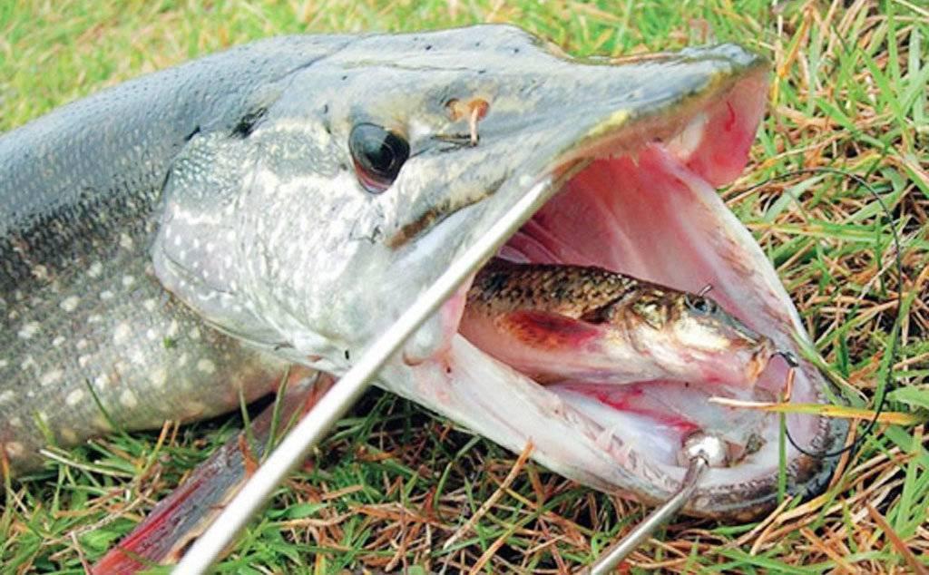 Рыбалка в ставрополе