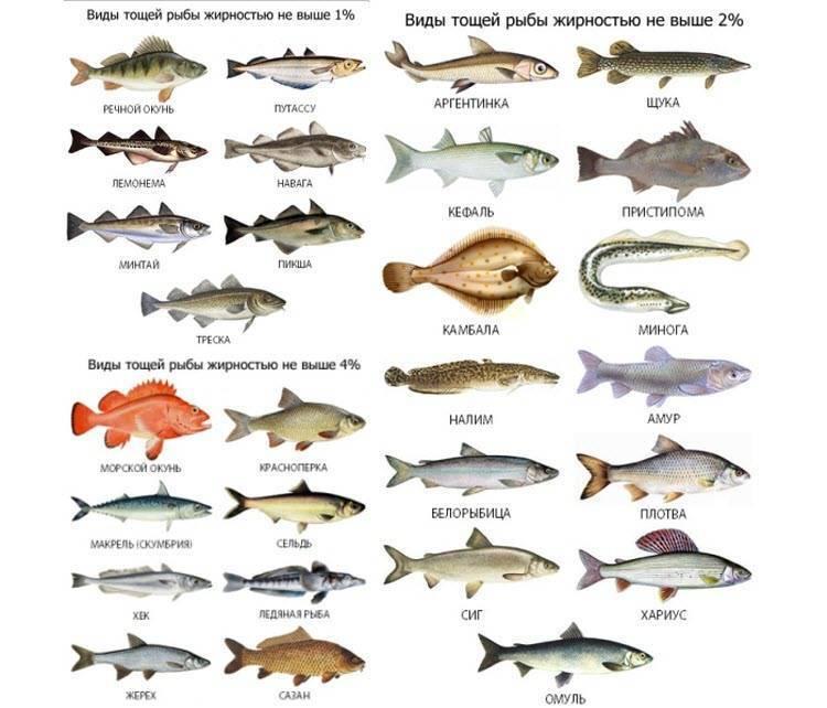 Про рыбалку - секреты рыбной ловли | снасти, приманки и прикормки. активаторы клева. рыболовные узлы