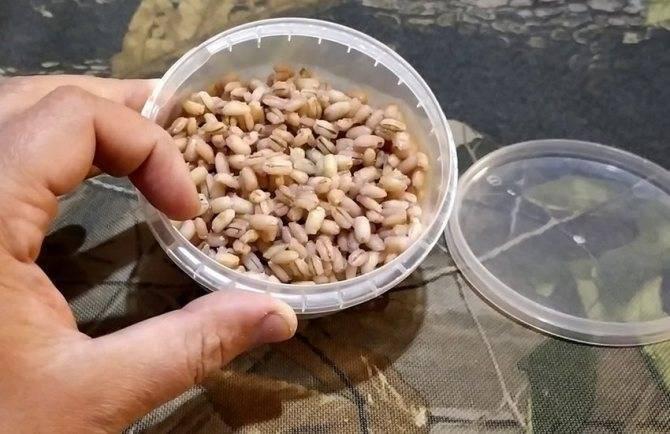 Сколько времени и как варить перловку для рыбалки на карася: особенности и рекомендации